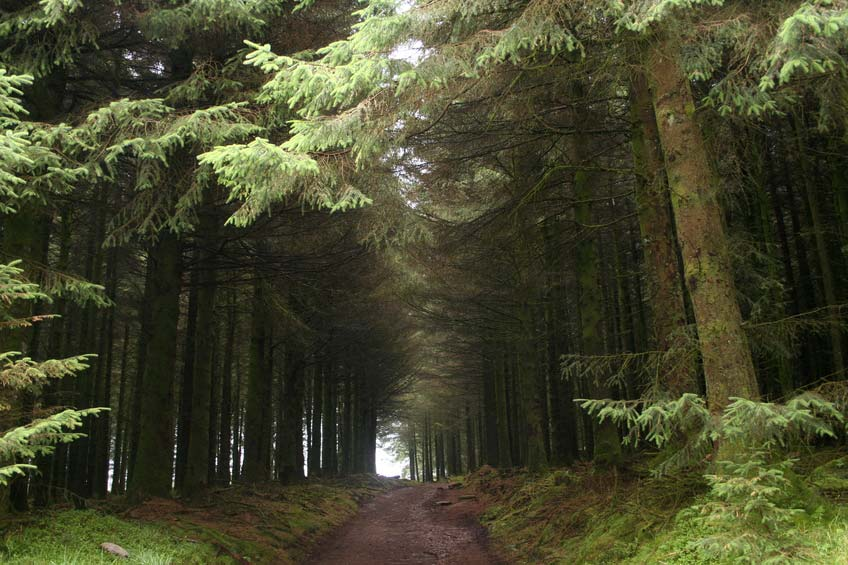 Fernworthy Forest Devon Guide