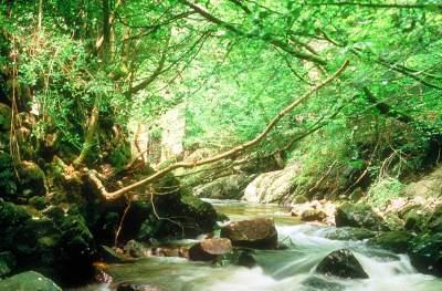River Erme, Ivybridge