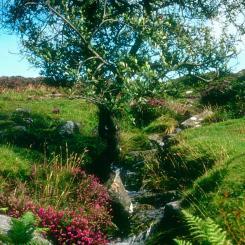 Stream near Grimspound