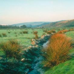 Avon Marshes on Brent Moor