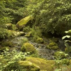Becky Falls Stream