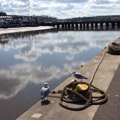 River Torridge and Long Bridge - Bideford