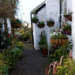 Clovelly Hanging Baskets