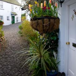 Clovelly Cottage Flowers