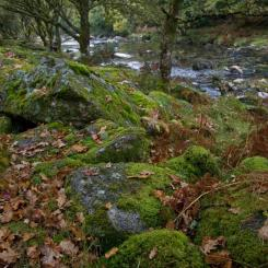 River Dart Autumn
