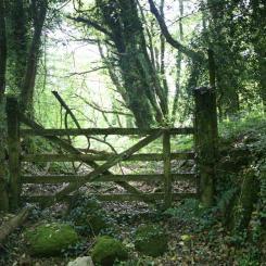 Gate in the Woods - Dartmoor