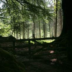 Dartmoor Woods