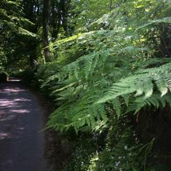 Shady Lane - Dartmoor