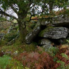 Dartmoor Autumn