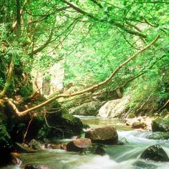 River Erme at Ivybridge