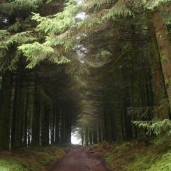 Fernworthy Forest
