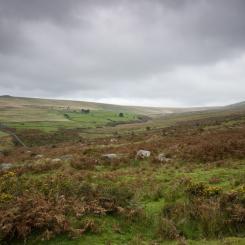 Merrivale Moorland