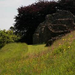 Okehampton Castle Flowers