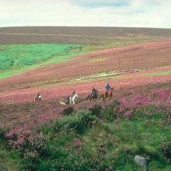 Pony Trekking on Dartmoor