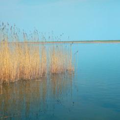 Reeds on Slapton Ley
