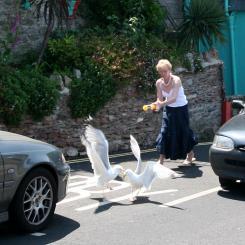 Seagull Baiting