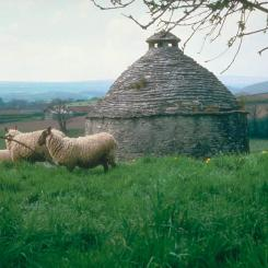 Sheep and Dovecote