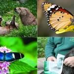 Buckfast Butterflies & Dartmoor Otter Sanctuary