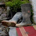 Clovelly Welly!