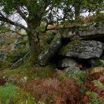 Dartmoor Autumn
