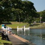 Feeding the Ducks - Goodrington