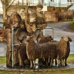 Hatherleigh sheep sculpture