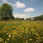 Moretonhampstead Buttercups