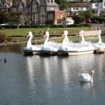 Spot the Real Swan
