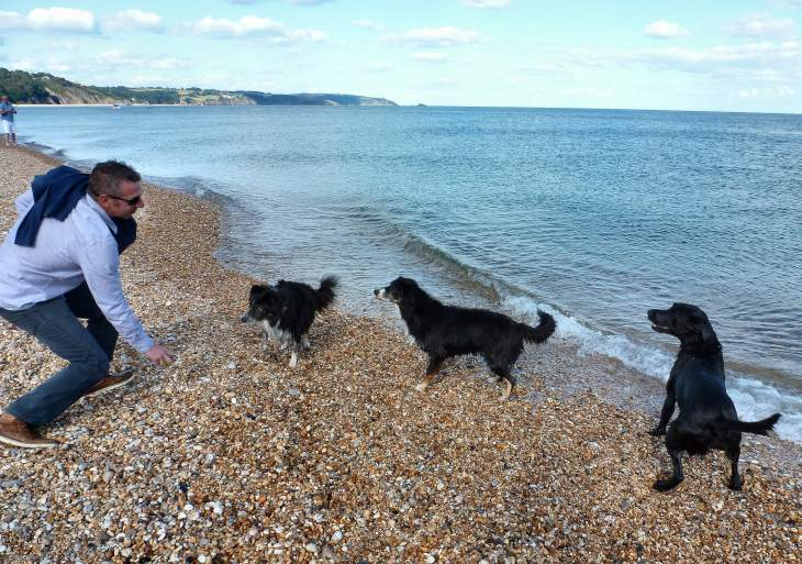 Many dog-friendly beaches in the local area