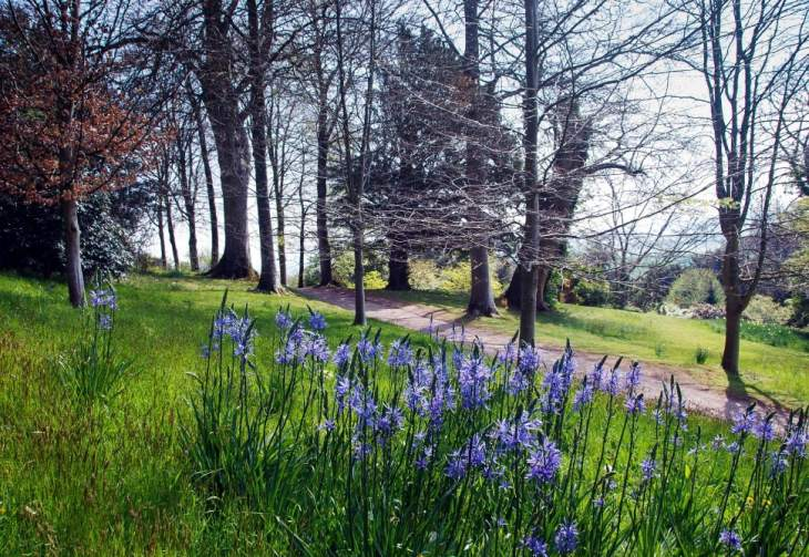 Killerton gardens Spring