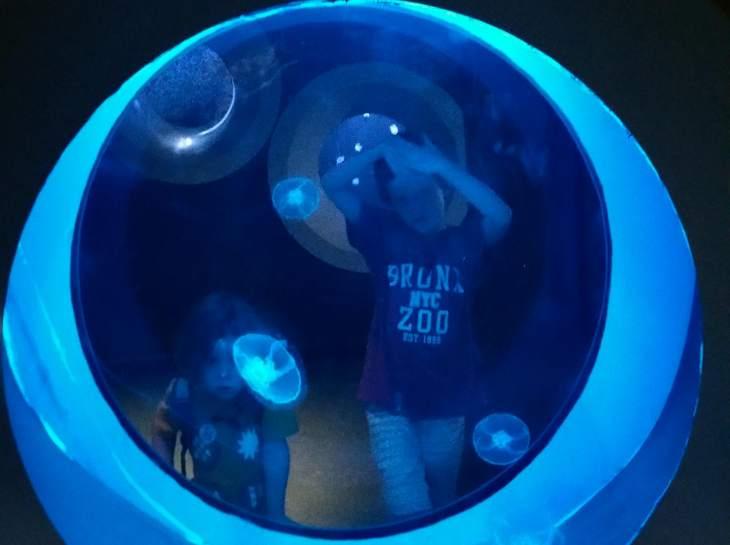 Plymouth Aquarium jellyfish