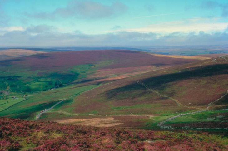 Dartmoor Heather