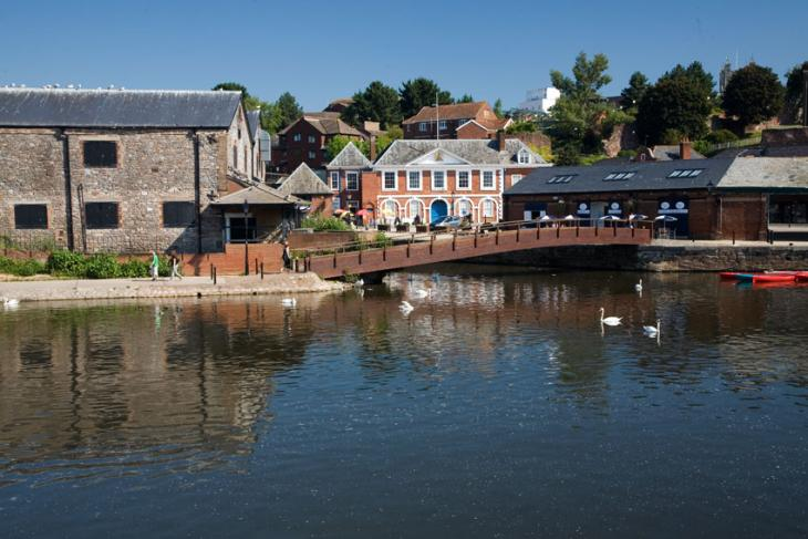 Swans on River Exe - Exeter