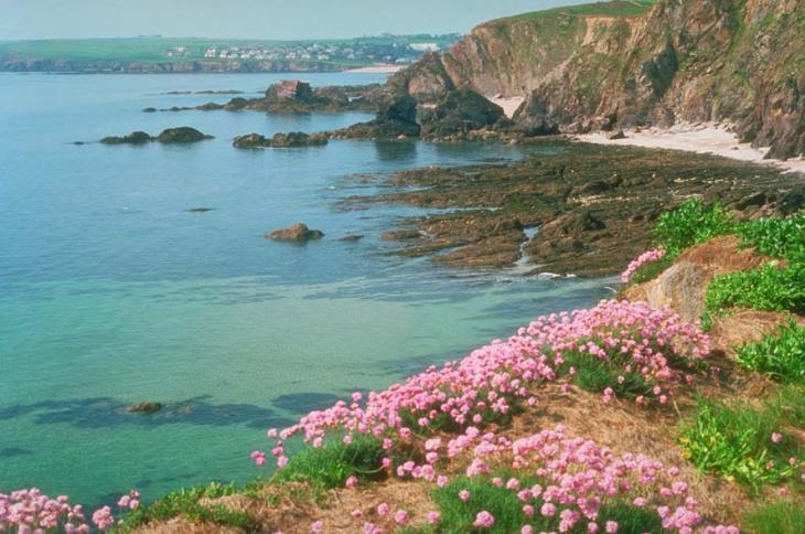 Hope Cove cliffs