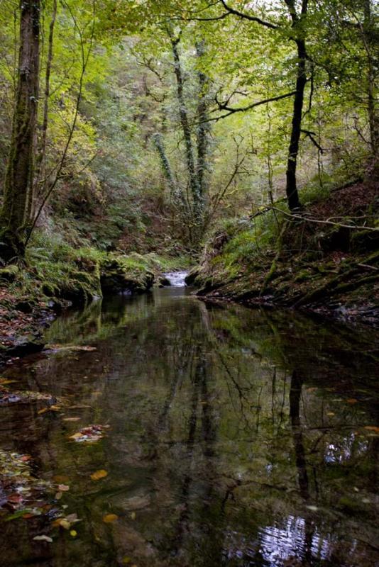 River Lyd - Lydford Gorge
