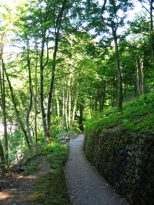Lynmouth Woodland Path